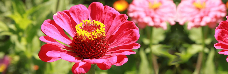colors_flowers_garden4